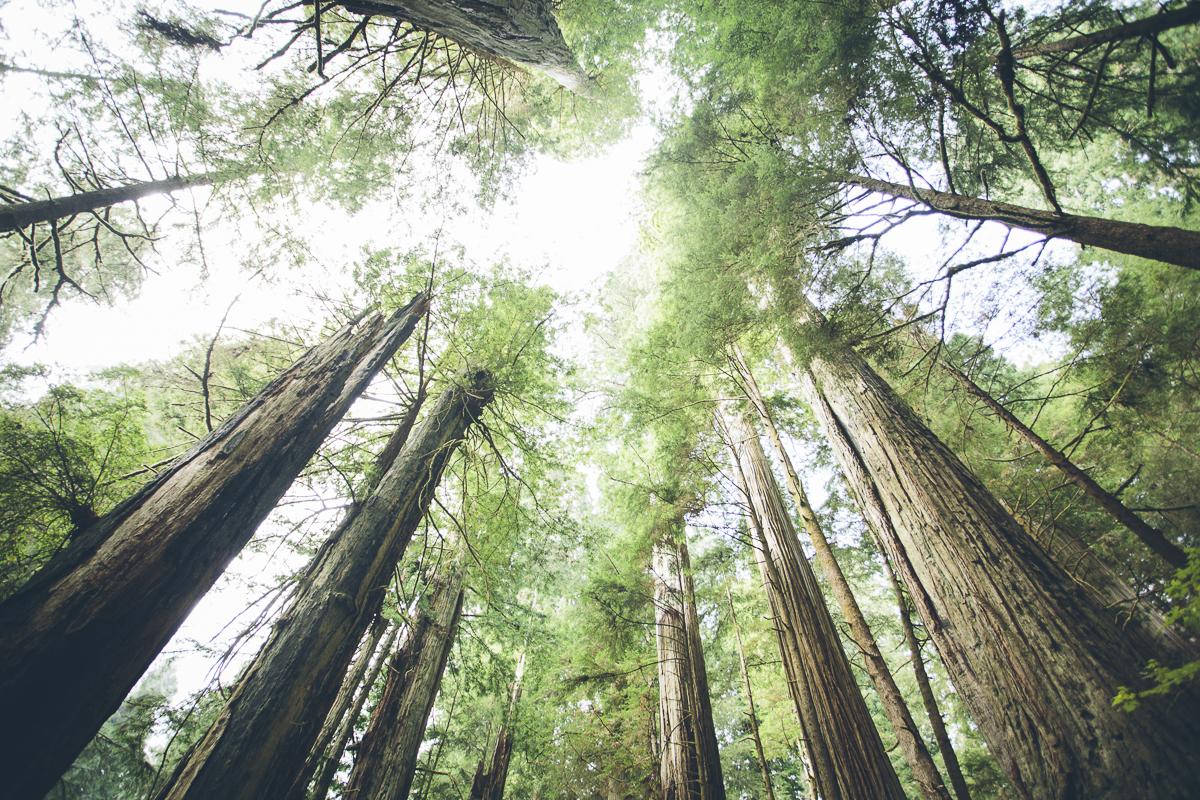131016_DTG_Redwoods-1