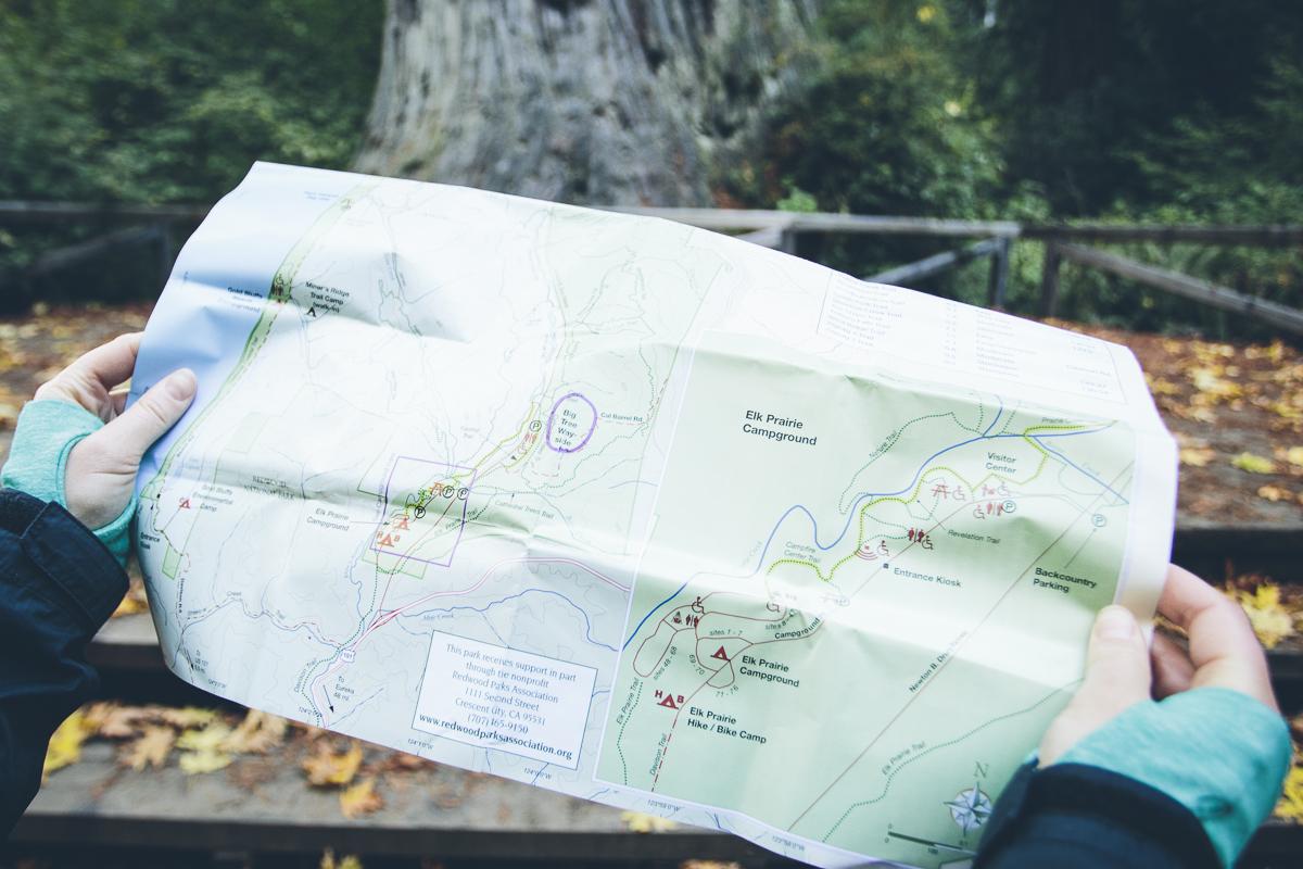 131016_DTG_Redwoods-12
