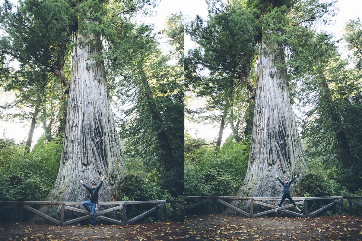 131016_DTG_Redwoods-13
