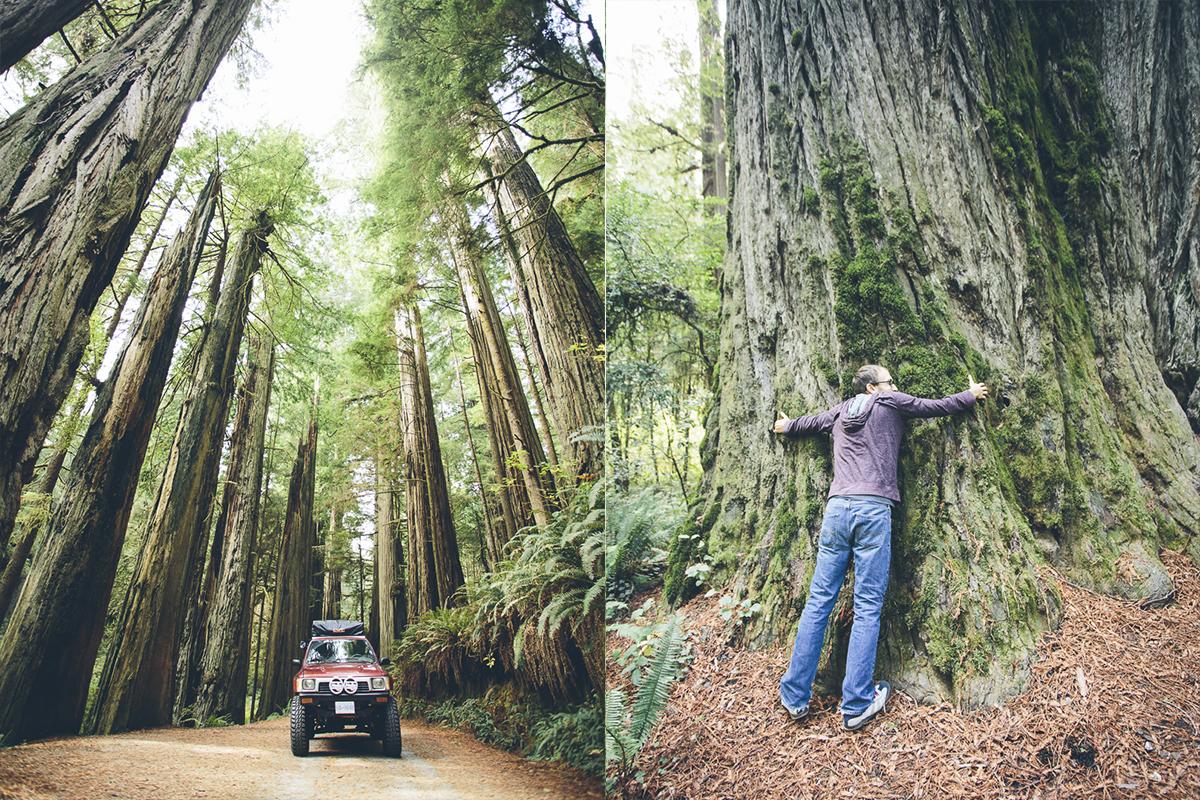 131016_DTG_Redwoods-2