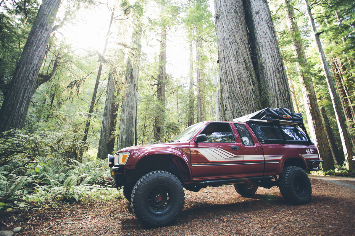 131016_DTG_Redwoods-3