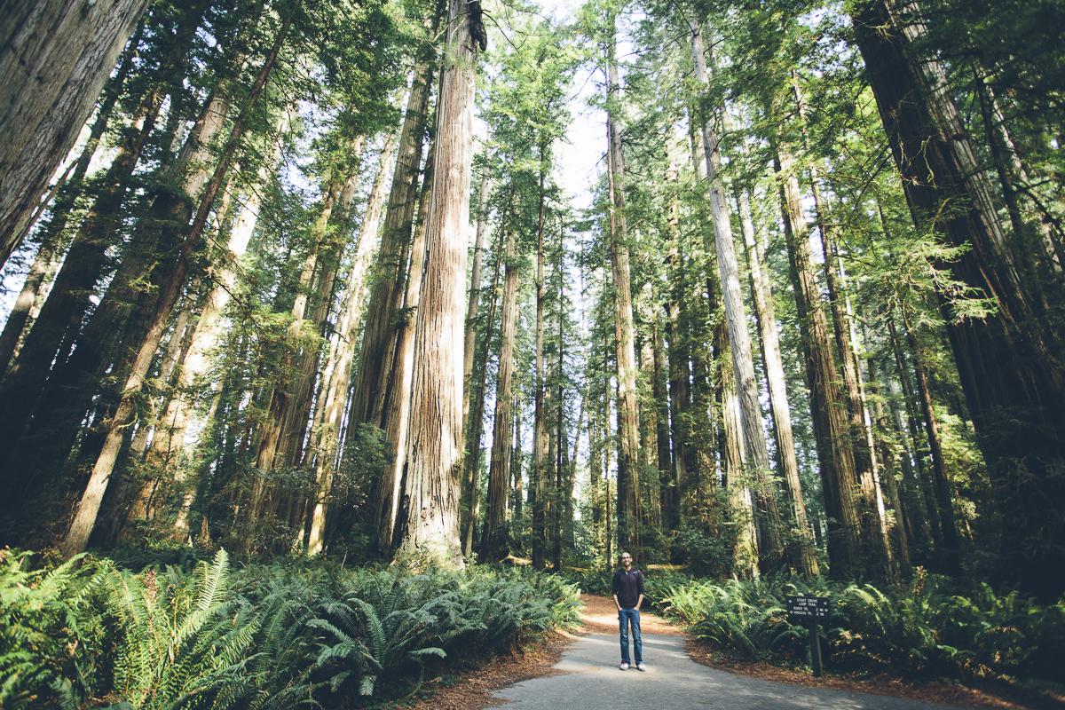 131016_DTG_Redwoods-6