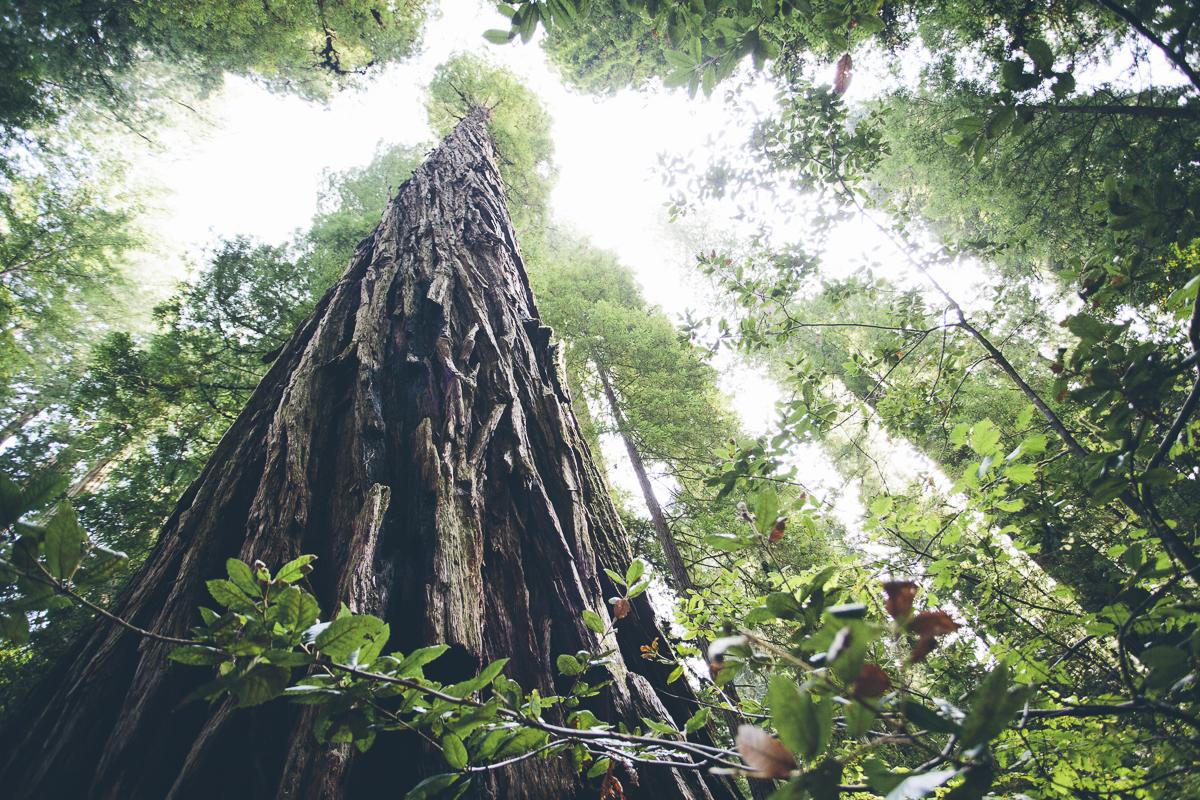 131016_DTG_Redwoods-7