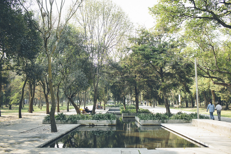 140201_DeskToGlory_Mexico_City-13