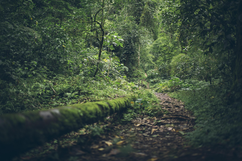 Desk to Glory - Hiking Boquete-4