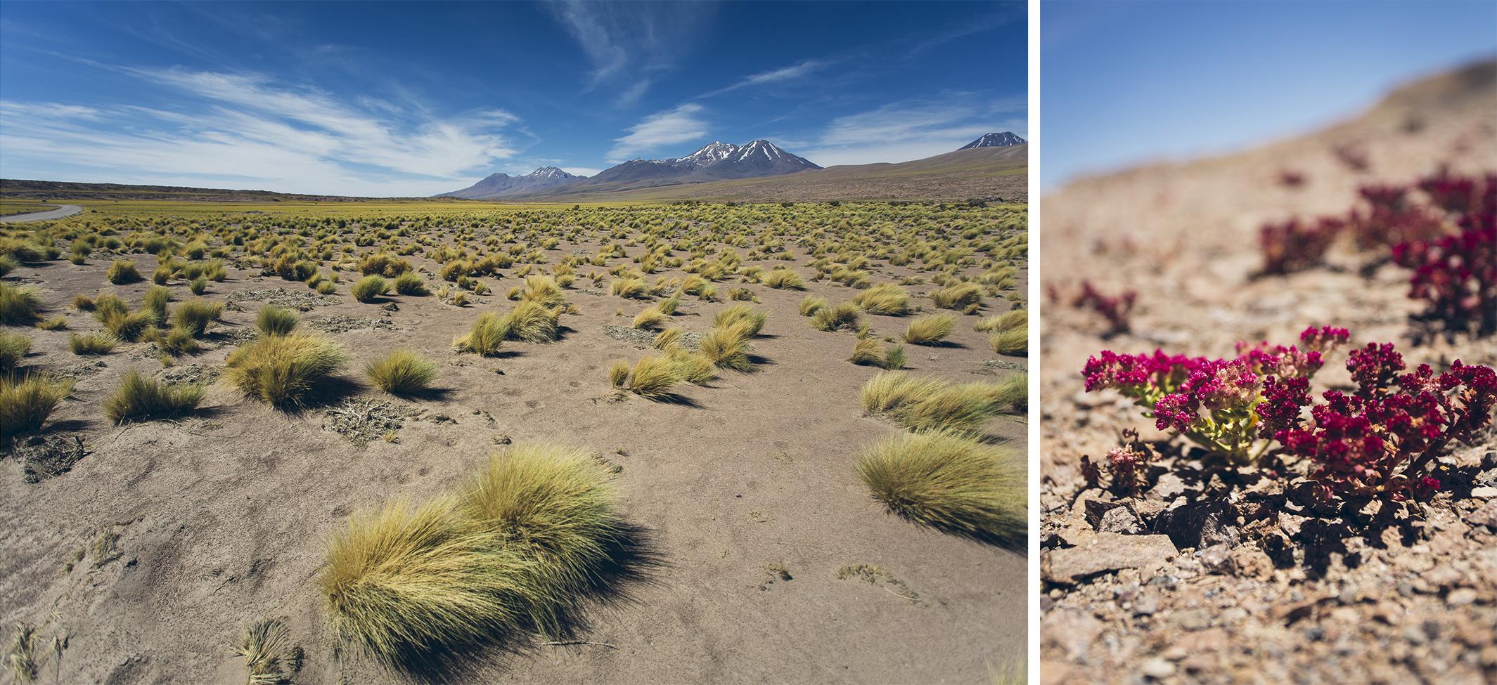 desktoglory_northern_argentina-6 copy